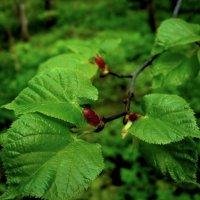 В тени леса :: Ирина Via