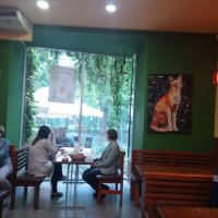 """Пиццерия """"StarPizzaCafe"""" с кошками :: Ольга Винницкая (Olenka)"""