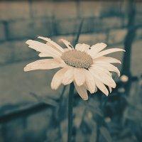 Любовь как цветок — ей нужно время, чтобы расцвести. :: Ирина С