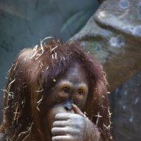 в зоопарке... :: Светлана
