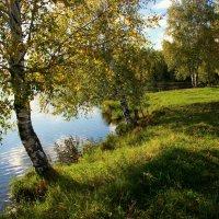 И жёлтый лист мерцает средь ветвей... :: Нэля Лысенко