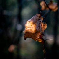 Лист и солнечный луч :: Dimirtyi