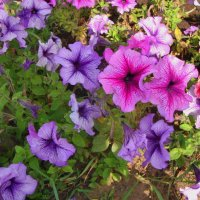 прелесть сентябрьских цветов... :: Галина Филоросс