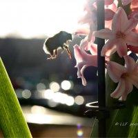 Цветы :: Liudmila LLF