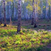 Весенний утренний свет . :: Мила Бовкун