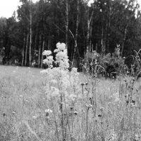 Травы :: Елена Елена