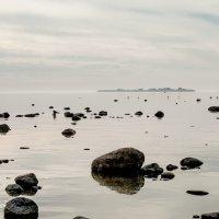 На Финском заливе (29) :: Виталий