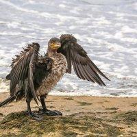 Нежданный гость на нашем пляже :: Нилла Шарафан