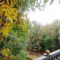 Вот и осень подкралась :: татьяна Сапего