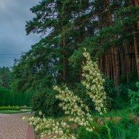 цветы :: Ольга (Кошкотень) Медведева