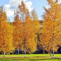 Осенние берёзы :: Leonid Tabakov