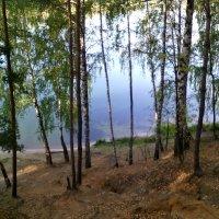 Увиденная красота в лесу вчера 14 сентября 2018 года :: Ольга Кривых