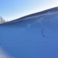 Много снега :: Валерий К.