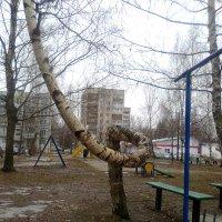Экспонат из танцующего леса :: m742sergey