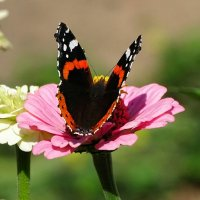 О бабочках сентября :: Милешкин Владимир Алексеевич