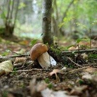 Гриб в засаде на грибника :) :: Елена Kазак