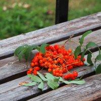 В саду горит огонь рябины красной.... :: Tatiana Markova