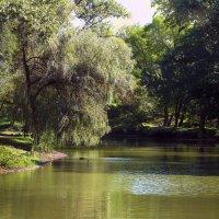Ранняя осень в парке. :: barsuk lesnoi