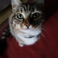 Cat :: Елена Елена