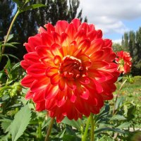 Пылкий цветок :: Татьяна Георгиевна
