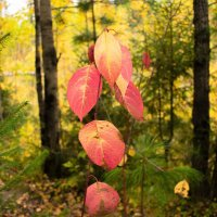 Осень в красках :: Евгений Ветров