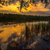 Озеро Малое Борково ,Ленинградская область :: Дмитрий Рутковский