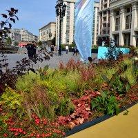 Цветы на Манежной площади :: Яша Баранов