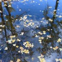 Осень в целом и в частности :: Валерий Михмель