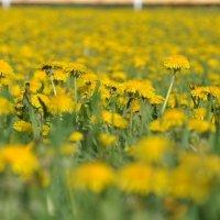 Солнечная полянка :: Юлия Якубова