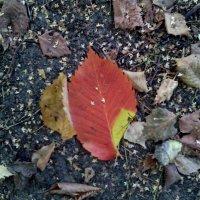 И всё таки осень! Эта безумно красивая некогда с яркими красками осень, а где то, сушёная как вобла. :: Ольга Кривых