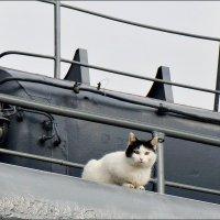 Портрет морской кошки :: Кай-8 (Ярослав) Забелин