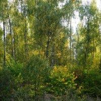 Вечерний свет в осеннем лесу... :: марк