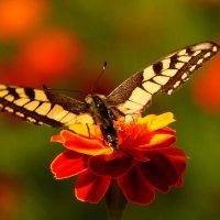 порхающие цветы ушедшего лета 4 :: Александр Прокудин