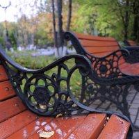 Осенний парк, промокшая скамейка.... :: Анна Приходько