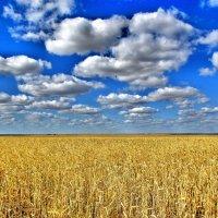 Урожай :: Владимир