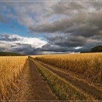 Дорога в осень :: Наталия Женишек