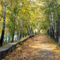 Осень пришла на старую аллею :: Екатерина Торганская