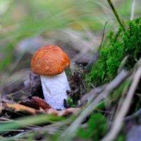 в осеннем лесу... #6 :: Андрей Вестмит