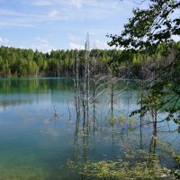 Лесное озеро :: Наталия Григорьева
