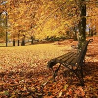В осеннем парке :: Lusi Almaz