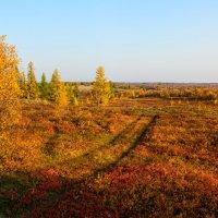 Вот и осень ... :: Олег Кулябин