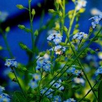цветочки-веточки 1 :: Александр Прокудин