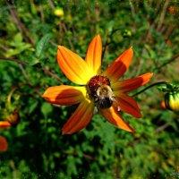 Цветок и пчела :: Nina Yudicheva