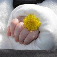Солнце в руках... :: splin11