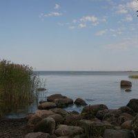 Камушки, камыши и горизонт :: Владимир Гилясев