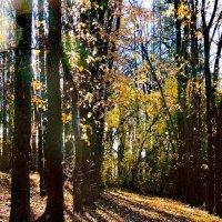 Осенние тени :: Попкова Александра