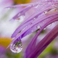 Весь мир отражается в капле воды! :: Наталья Кузнецова