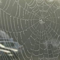Взгляд на мир сквозь паутину :: Вячеслав Васильевич