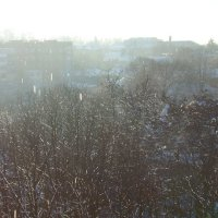 Яркое начало зимы :: Syntaxist (Светлана)