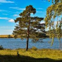 осень .сосна.... :: petyxov петухов